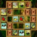 Bird cards match - memory game